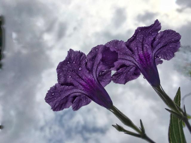 Macam Macam Bunga Hias