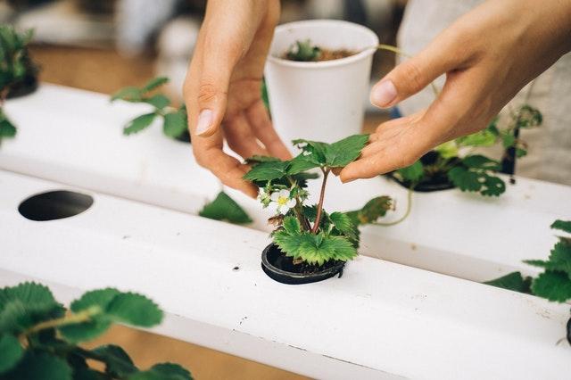 Usaha Yang Berhubungan Dengan Pertanian
